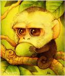 Capuchin by faboarts