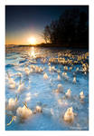 Ice Candles by theFouro