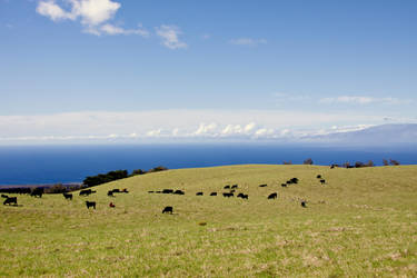 Even the cows love Hawaii by JHealphoto