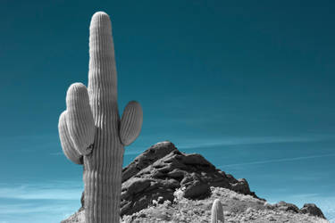 Infrared Cactus by JHealphoto