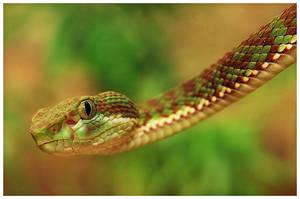 Snake 4 by RomRom53