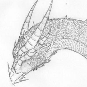 TurtleClairou's Profile Picture