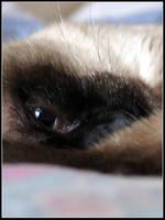 Feline Cocoon by bdusen