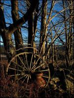 Golden Winter by bdusen