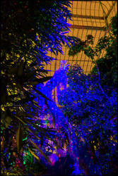 Night Lights, Part 4: Dancing in the Trees by bdusen
