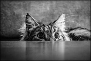 The Devil in Hiding by bdusen