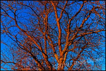 Red Winter by bdusen