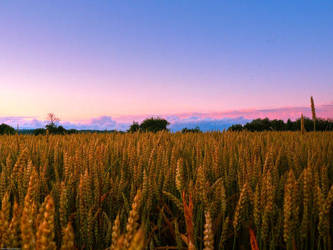 Field Of Gold by Kayley1590
