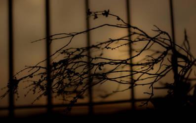 Thorns by myndsnare