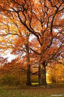 Autumn Wood I by Mariusart
