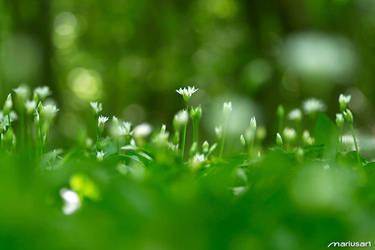Springtime VII by Mariusart