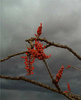 thorny sky by cspirit