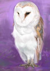 Barn Owl by dreamin-Lea