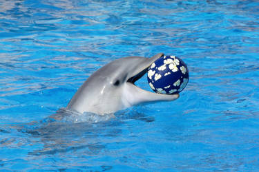 Playfull dolphin by Orcas-lover