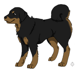 Kael - Tibetan Mastiff by Sheppard56