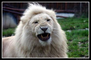 Showing his teeth by Arwen91