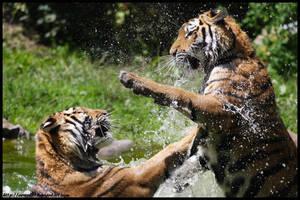 Fight II by Arwen91
