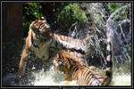 Flying Tiger by Arwen91