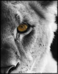 The Hunter's Eye by Arwen91