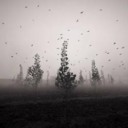 The mist by taykut