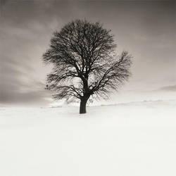 In white by taykut