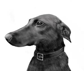 Long-Nosed Dog Hound by LocationCreator