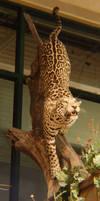 leopard by staffdancer