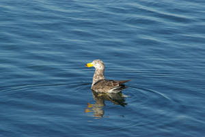 Gull 10 by FallowpenStock