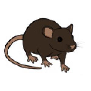 gormash's Profile Picture
