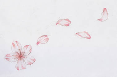 sakura by roadkillblues