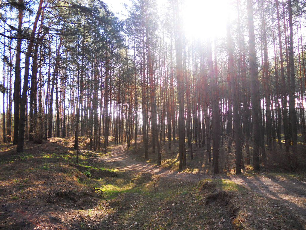 The path in the woods and beautiful light by artomberus