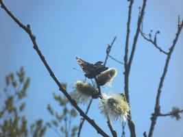 Spring and butterfly 2 by artomberus