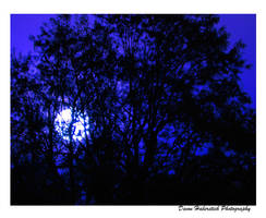 Night's Sky by Devdevie