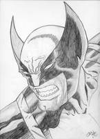 Wolverine by usman49