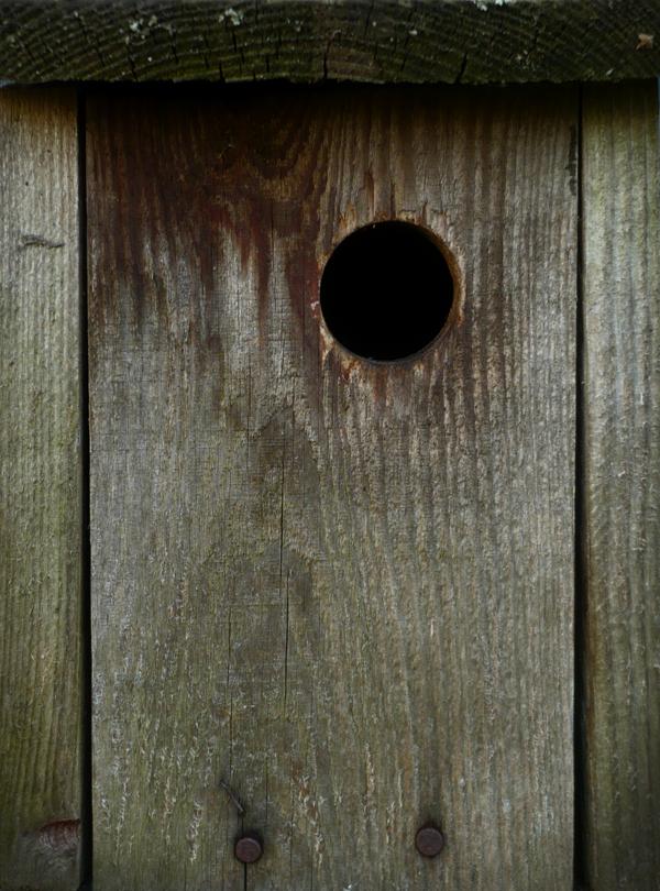 Nest box by Silvel