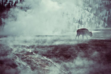Lone Bison, Yellowstone National Park by lepersabstain