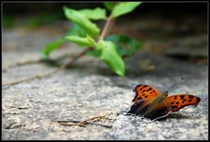 Moth Portrait by WVUARTIST