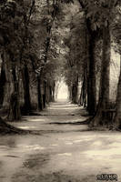 Forest Path by saka50ft