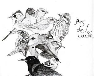 Aves del Jardin Encantado by Respinoza