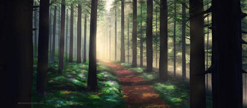 Forest by Darrison