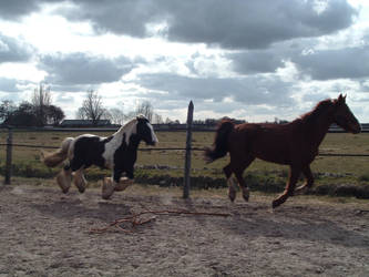 Draft in action 4 by Equine-Resource