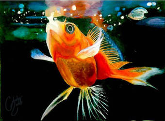 Acrylic Gold Fish by Cheeky-Scrub