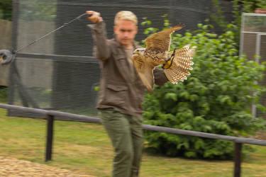 Falcon by tuAlly