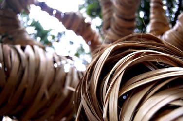 --- Web of Life -- by Rizkyuto