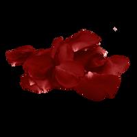 Rose Petal PNG 8 Vampstock by VAMPSTOCK