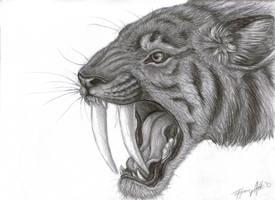Smilodon by LUNAtic-36