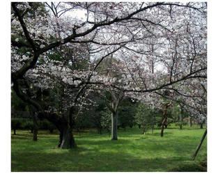 Through the Garden by mahoujirou