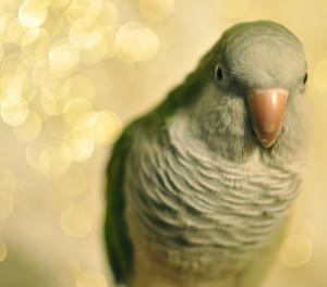 HecklingHyena's Profile Picture