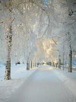 Snow by AdeleReadlike