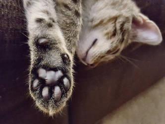 Toe Beans by Kelii